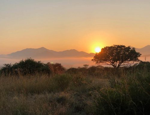 Winter – the best time to go on safari (especially in South Africa)